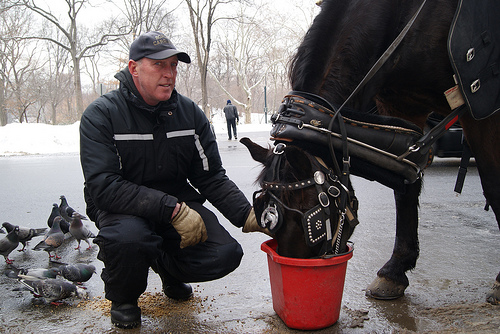 NYC Cold: Despite the cold, carriage rides continue in Central Park