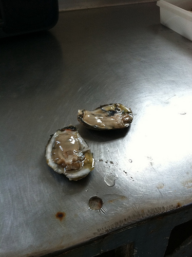 Oysters disappearing on the Chesapeake