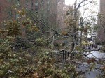 Sandy's destruction in Stuy-town
