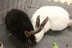 Bunnies find love through speed dating