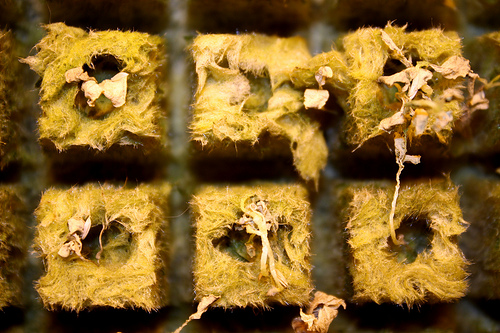 This hydroponic system is a seed tray that fills up and drains at least three times a day with nutrient rich water that goes directly to the root of the baby plant. Photo by Gabrielle A. Wright.