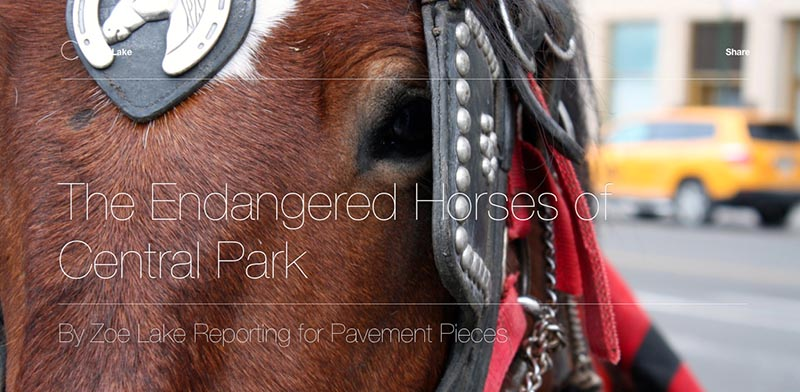 The endangered horses of Central Park