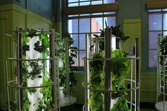 Vertical towers that recirculate water allow students at Public School 55 in the South Bronx to grow fresh produce year-round. By Elizabeth Arakelian