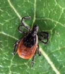 Lyme Disease is spreading in NYC and the culprit may be climate change