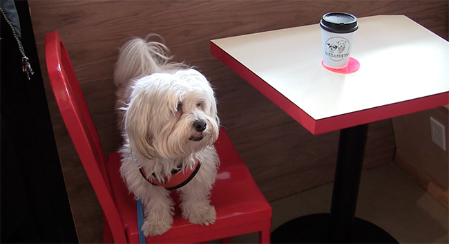 An East Village Cafe for Dogs