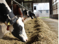 Despite Tariffs, Trade War, Trump Remains Popular Among Upstate Dairy Farmers